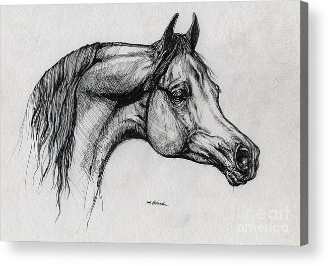 Horse Acrylic Print featuring the drawing Arabian Horse Drawing 40 by Angel Tarantella