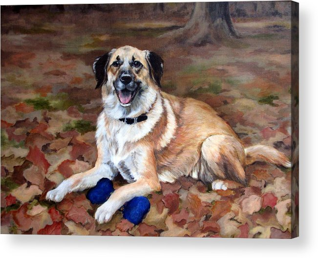 Dog Acrylic Print featuring the painting Dutch Shepherd by Sandra Chase