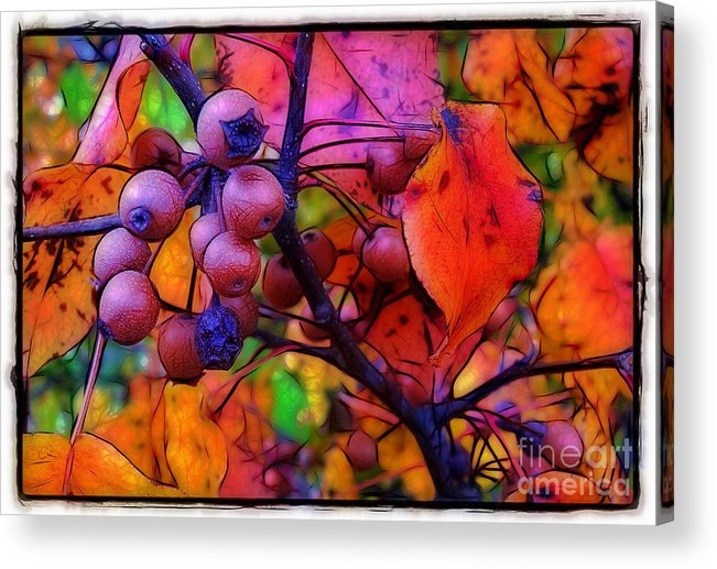 Bradford Acrylic Print featuring the photograph Bradford Pear In Autumn by Judi Bagwell