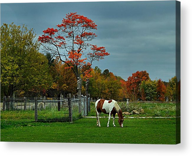 Fall Scenes Acrylic Print featuring the photograph The Pinto by Julie Dant