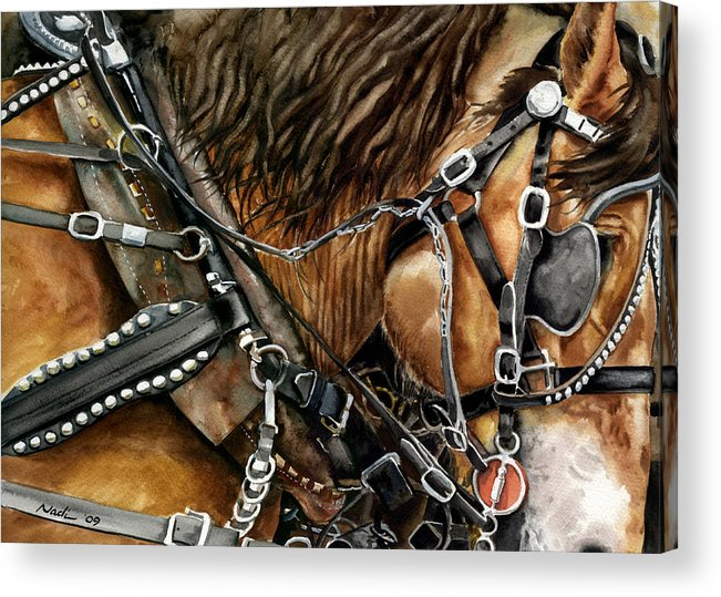 Horse Acrylic Print featuring the painting Buckskin by Nadi Spencer
