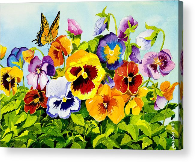 Flower Acrylic Print featuring the painting Pansies With Butterfly by Janis Grau