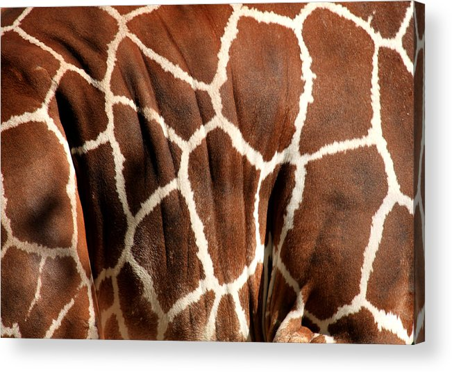 Giraffe Acrylic Print featuring the photograph Wildlife Patterns by Aidan Moran