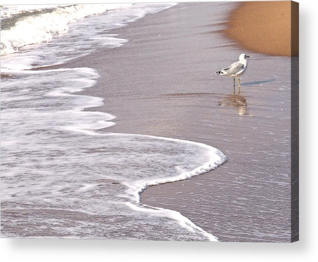 Sea Gull Walking On The Beach On A Hot Summer Day Acrylic Print featuring the photograph Sea Gull Reflection by Cindy Lee Longhini