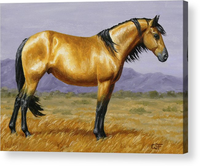 Horse Acrylic Print featuring the painting Buckskin Mustang Stallion by Crista Forest