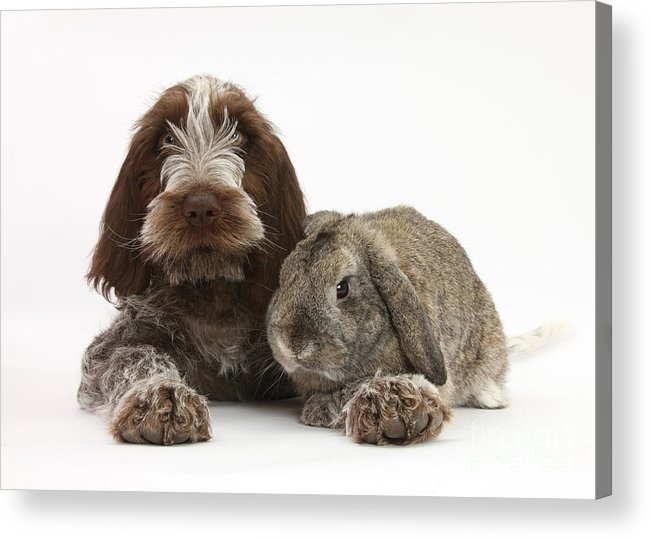 Animal Acrylic Print featuring the photograph Puppy And Rabbt by Mark Taylor