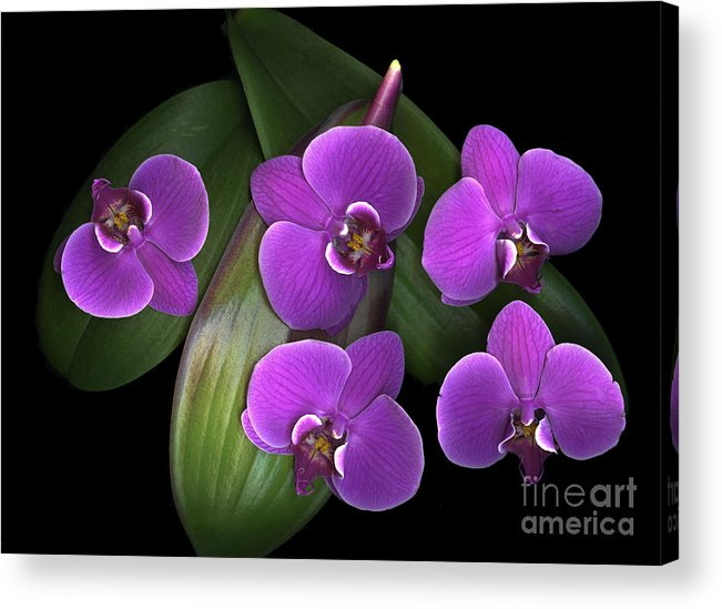 Purple Acrylic Print featuring the photograph Bees On Green by Christian Slanec