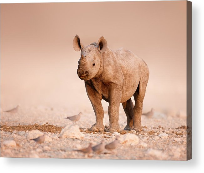 Wild Acrylic Print featuring the photograph Black Rhinoceros Baby by Johan Swanepoel