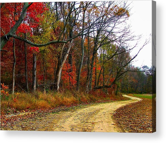Bottomlands Acrylic Print featuring the photograph Autumn On Bottomland Road by Julie Dant