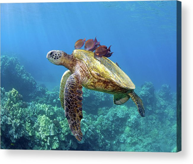 Horizontal Acrylic Print featuring the photograph Sea Turtle Underwater by M.M. Sweet