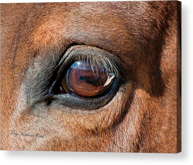Equine Acrylic Print featuring the photograph The Equine Eye by Terry Kirkland Cook