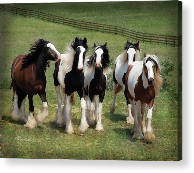 Equine Acrylic Print featuring the photograph Stunning Beauty by Terry Kirkland Cook