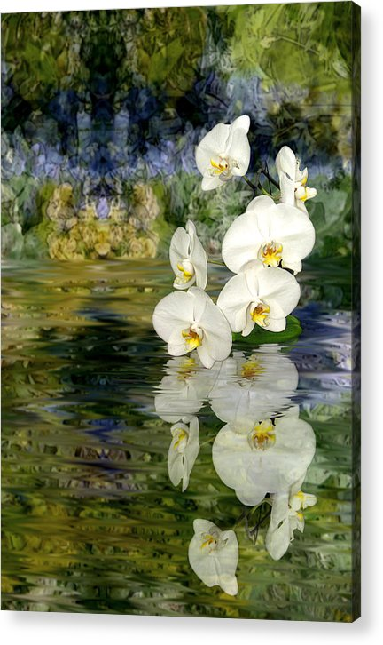 Orchid Acrylic Print featuring the photograph Water Orchid by Tom Romeo