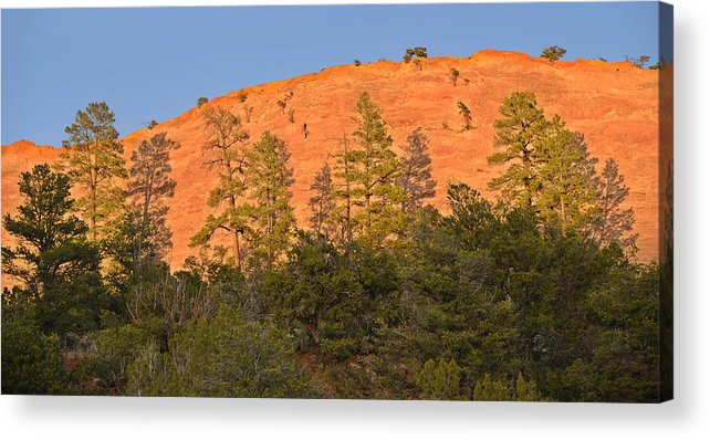Every Tree In Its Shadow Acrylic Print by Christine Till