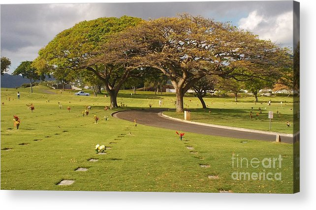 Nature Acrylic Print featuring the photograph Two Trees by Silvie Kendall