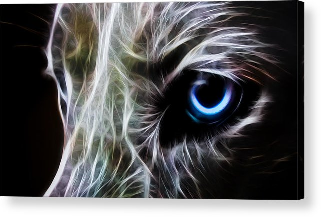 Wolf Acrylic Print featuring the drawing One Eye by Aged Pixel