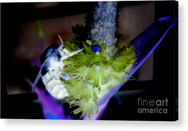 Bee Acrylic Print featuring the digital art Don't Bee Blue by Renee Trenholm