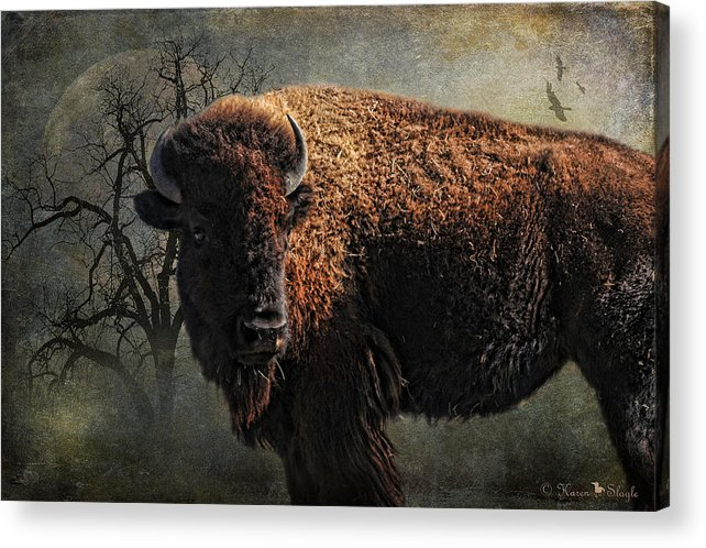 Buffalo Acrylic Print featuring the photograph Buffalo Moon by Karen Slagle