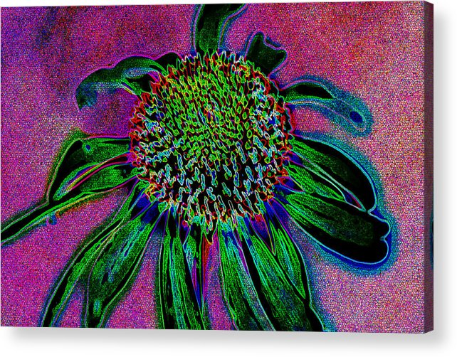 Abstract Acrylic Print featuring the photograph Coneflower by Simone Hester