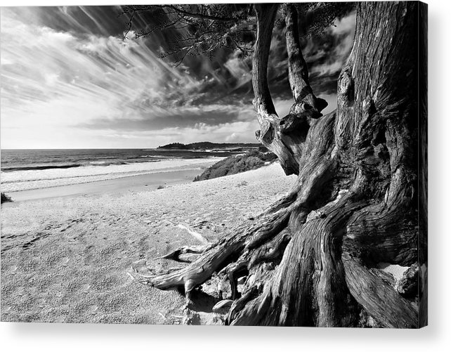 Carmel Beach Tree Roots Sandy Monterey Peninsula California Coastline Pacific Ocean Usa Black And Wh Acrylic Print featuring the photograph Tree Roots Carmel Beach by George Oze