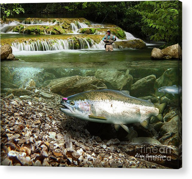 Trout Acrylic Print featuring the painting River Chrome by Alex Suescun