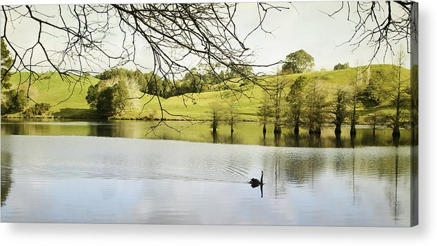 Swan Acrylic Print featuring the photograph Swan by Les Cunliffe