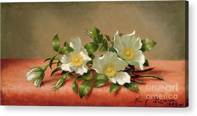 Cherokee Roses Acrylic Print featuring the painting Cherokee Roses by Martin Johnson Heade