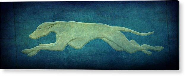 Greyhound Acrylic Print featuring the photograph Greyhound by Sandy Keeton