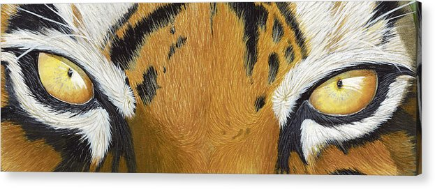 Tigers Eye Acrylic Print featuring the painting Tigers Eye by Laurie Bath