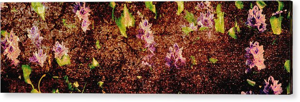 Abstract Acrylic Print featuring the photograph Water Flowers Vietnam by Skip Nall