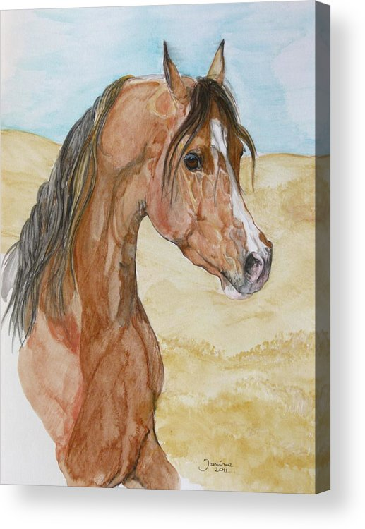 Horse Original Painting Acrylic Print featuring the drawing Asileh by Janina Suuronen