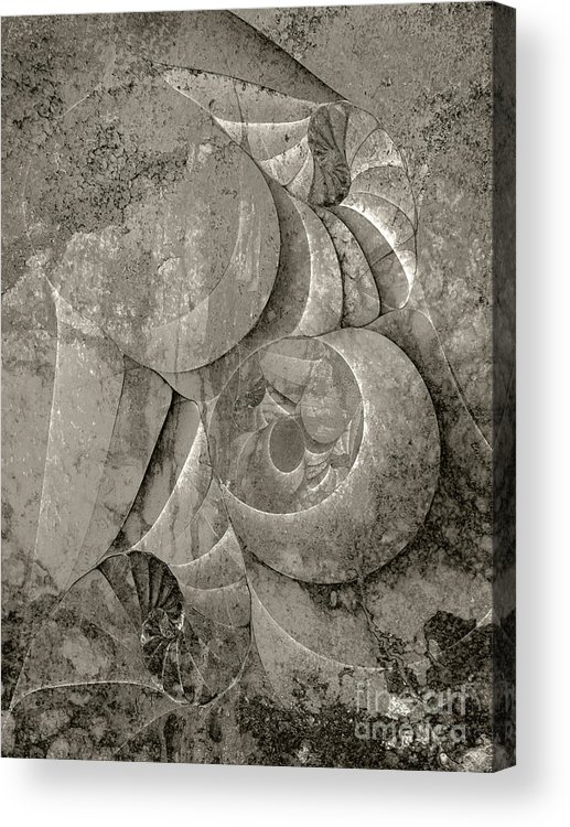 Fossilized Shell Acrylic Print featuring the digital art Fossilized Shell - B And W by Klara Acel