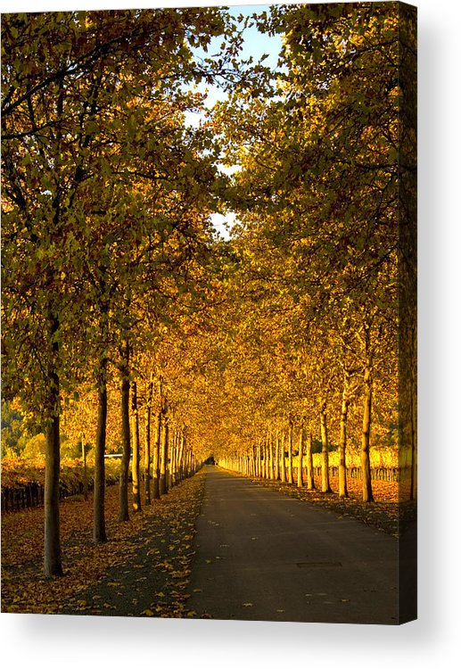 Napa Valley Acrylic Print featuring the photograph Napa Valley Fall by Bill Gallagher