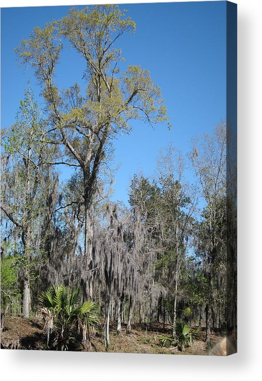New Acrylic Print featuring the photograph New Orleans - Swamp Boat Ride - 121265 by DC Photographer