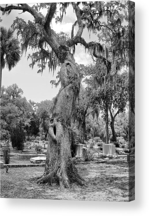 Oak Tree Acrylic Print featuring the photograph Oak Tree With A Face 2 by Victoria Lakes