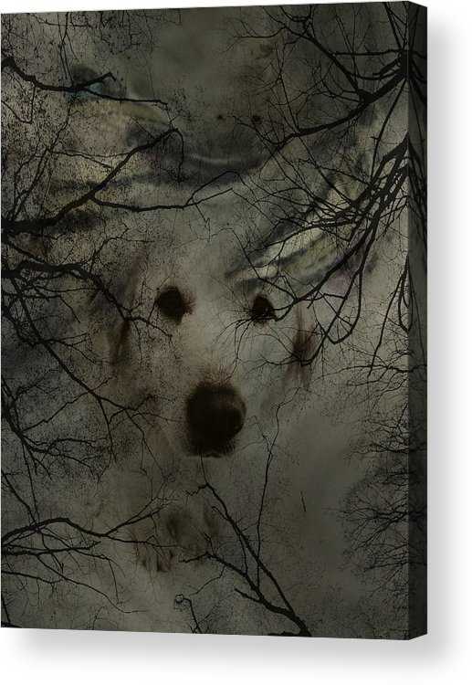 Dog Acrylic Print featuring the photograph Phantom Dog by Shirley Sirois