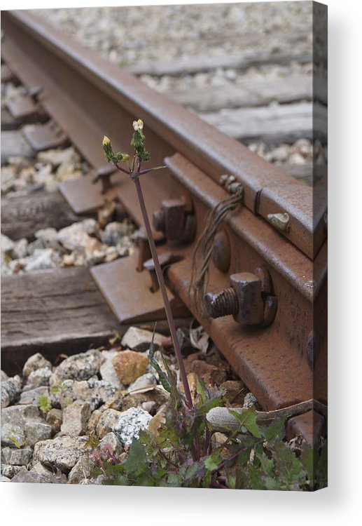 Weed Acrylic Print featuring the photograph The Tenacity Of Nature by MM Anderson