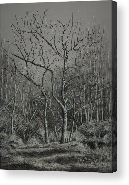 Trees Acrylic Print featuring the drawing Trees Along The Greenway by Janet Felts