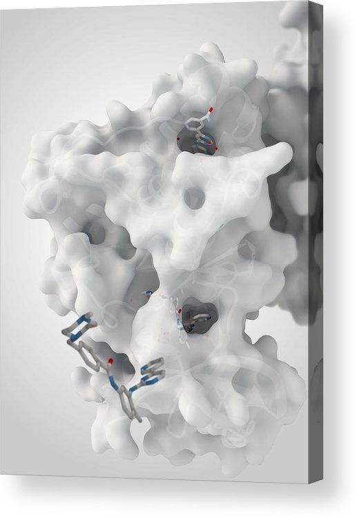 Molecule Acrylic Print featuring the photograph Cancer Protein And Drug Complex by Ramon Andrade 3dciencia