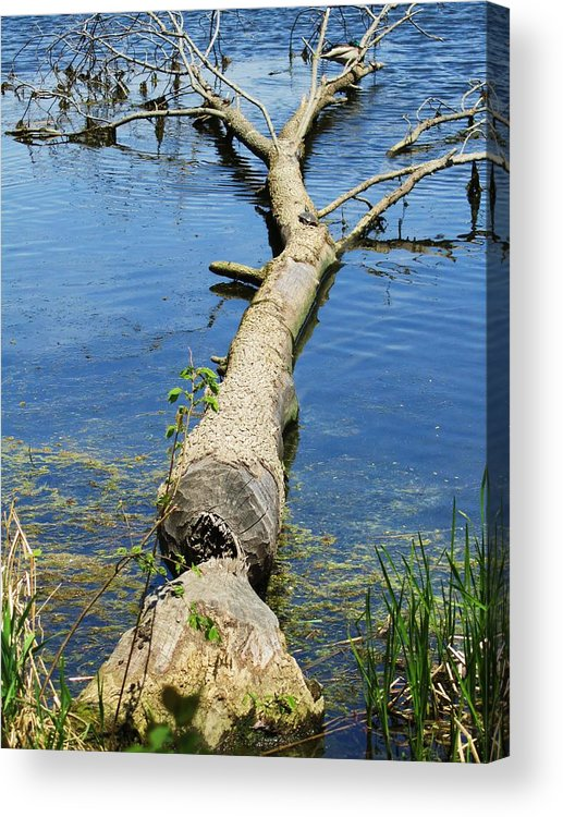 Herrick Lake Acrylic Print featuring the photograph Herrick Lake by Todd Sherlock