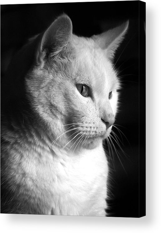 Nature Acrylic Print featuring the photograph Watchful by Bob Orsillo