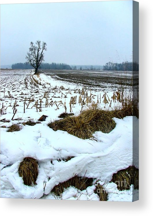 Amish Acrylic Print featuring the photograph Amish Field In Winter by Julie Dant