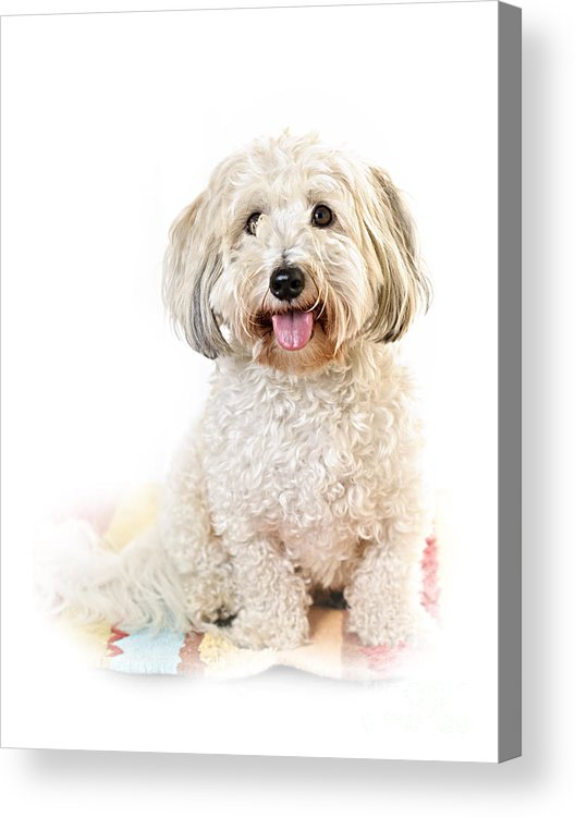 Dog Acrylic Print featuring the photograph Cute Dog Portrait by Elena Elisseeva