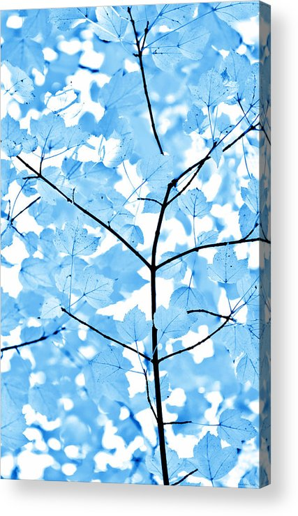 Leaf Acrylic Print featuring the photograph Blue Leaves Melody by Jennie Marie Schell