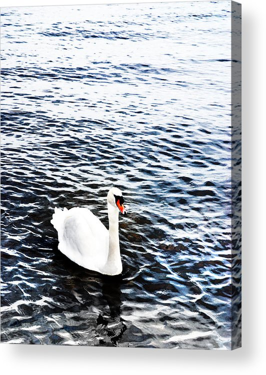 Swan Acrylic Print featuring the photograph Swan by Mark Rogan