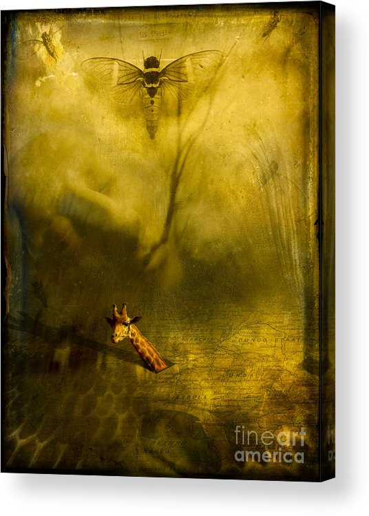 Giraffe Acrylic Print featuring the photograph Giraffe And The Heart Of Darkness by Paul Grand