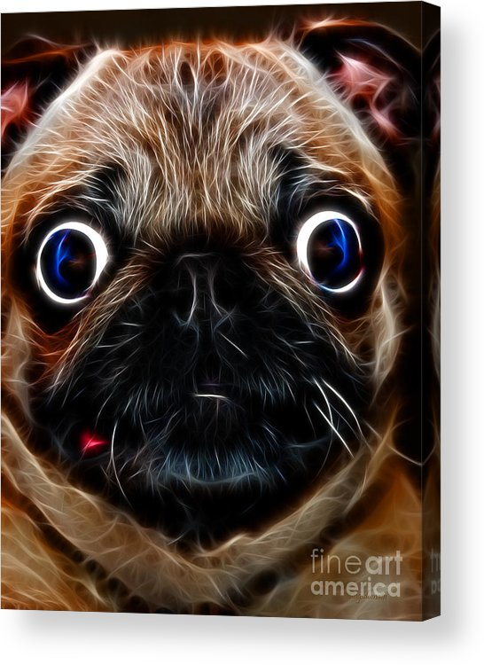 Animal Acrylic Print featuring the photograph Pug Dog - Electric by Wingsdomain Art and Photography