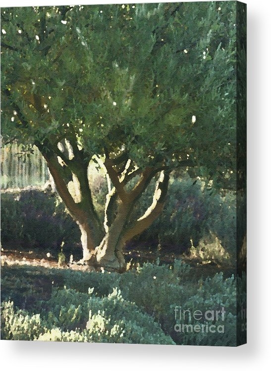 Corde Valle San Martin Ca Acrylic Print featuring the painting Vineyard Olive by Artist and Photographer Laura Wrede