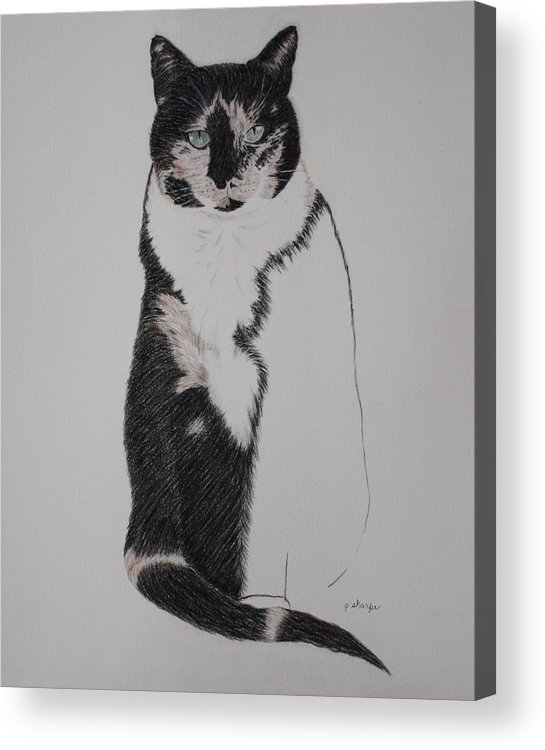 Spirit Cat Essence Acrylic Print featuring the drawing Friend II by Patsy Sharpe