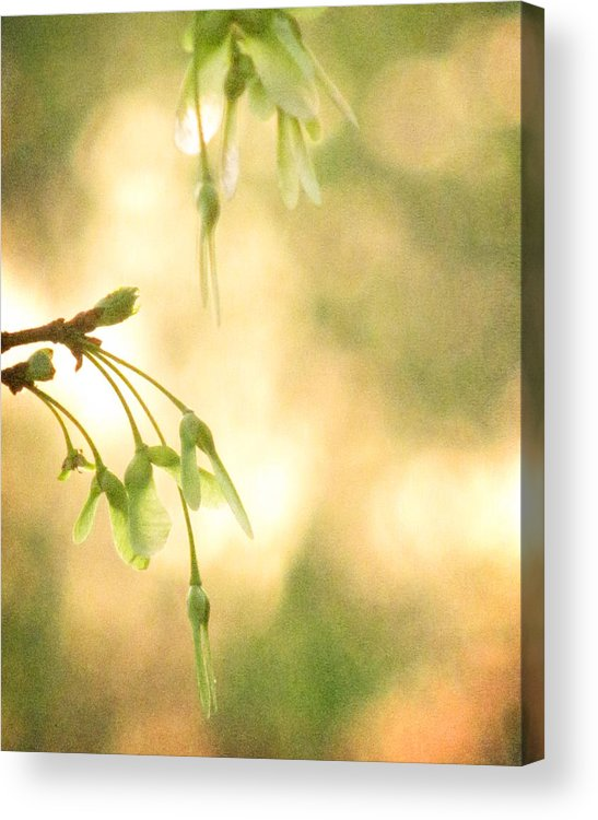 Seed Acrylic Print featuring the photograph Interlude by Amy Tyler